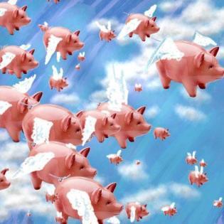 pigs-fly.jpg